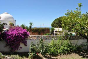 Trädgårdens andra del med en glimt av havet!